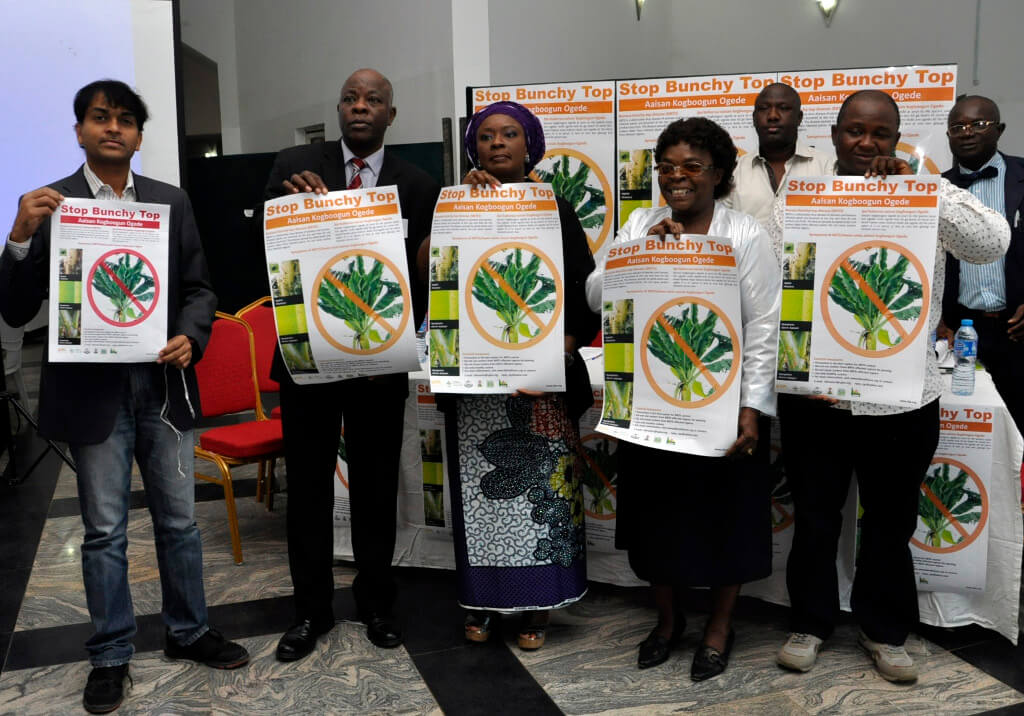 Picture of the 'Stop Bunchy Top' campaign was launch 3 December in Ogun State, Nigeria, by IITA and partners.