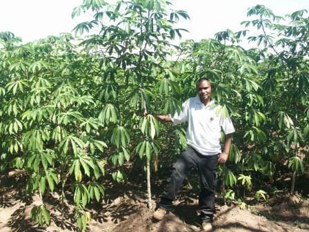 Picture of a happy cassava farmer shows off his field planted to IITA improved varieties.