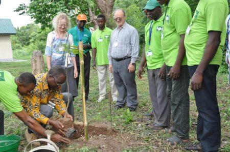 Picture of David Ladipo planting mahogany in arboretum with Deni Bown and Kenton Dashiell.