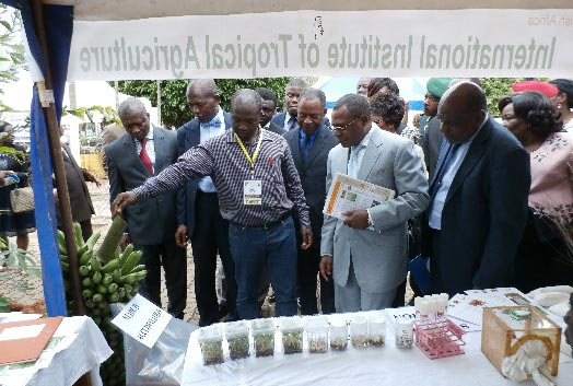 Picture of the governor and his team view the IITA stand.