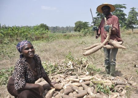 Picture of IITA's goals include ensuring food security for smallholder farmers.