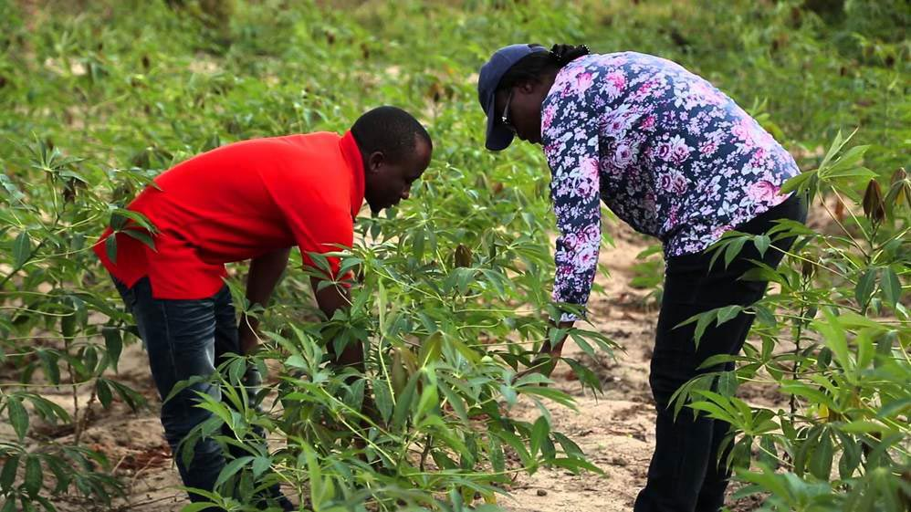 Picture of Veronica (right) assessing cassava in the field of one of the farmers involved in the study.