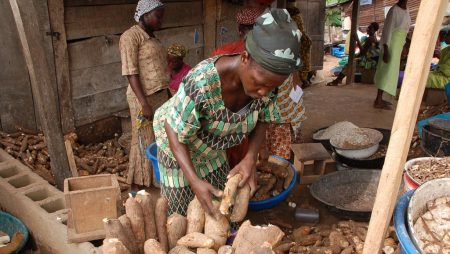 Picture of Millions of African households depend on cassava for their livelihoods.