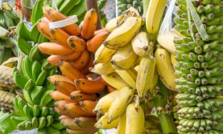 Picture of different varieties of banana abound.