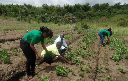 Picture of Agripreneurs tending their vegetable field.