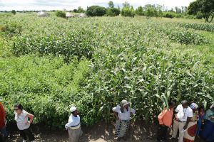 Picture of Africa RISING staff in the field