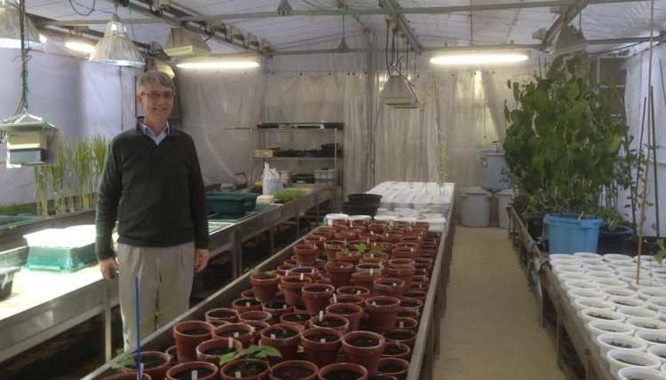 Picture of David De Koeyer in the greenhouse at IBRC