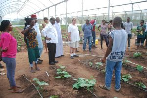 Picture of agripreneur shows propagation activities for cucumber.