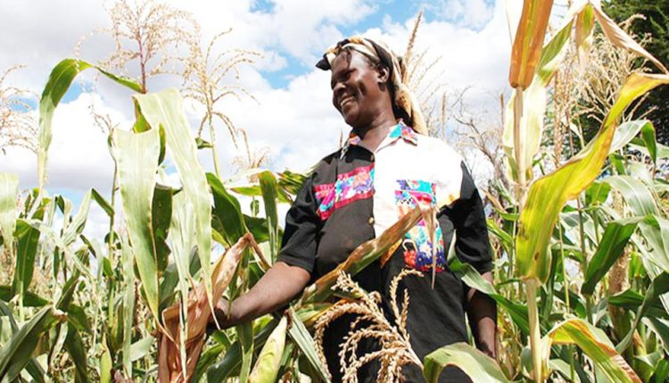 Picture of a farmer in her maize farm