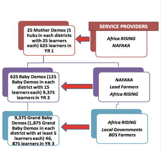 Diagram of the research and development model for innovation delivery and scaling as applied by the Africa RISING-NAFAKA Project for rice technologies
