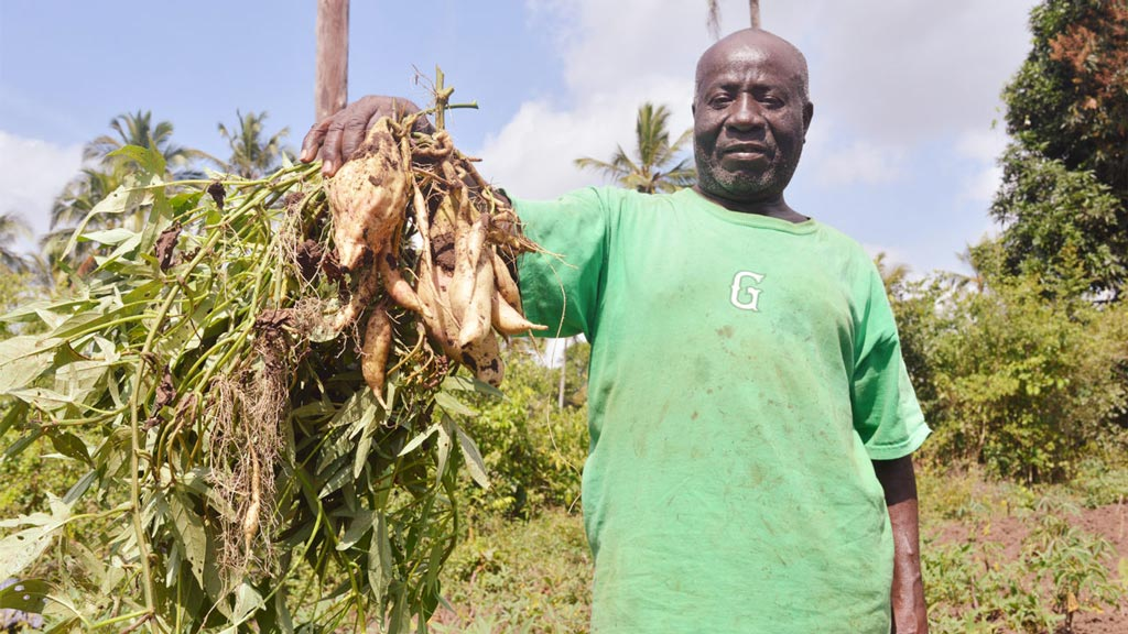 Picture of Ali Juma Haji, a farmer, displays harvested potatoes from his on-farm trial plots in Mitakawani, Unguja Zanzibar. Photo: Ngome – IITA