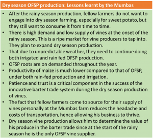 Picture of Dry season OFSP production