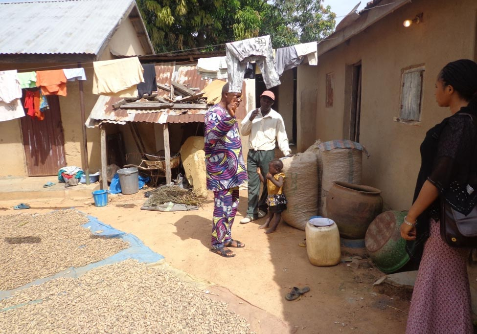 Picture of Bassey Ukem of N2Africa-Nigeria (left) and Bukar Kaka, project admin assistant (right), interacting with Habakkuk. On the ground is harvested groundnut that is being dried.