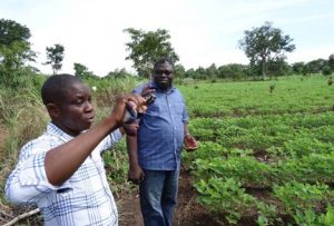 Picture of USAID-MARKETS II Soybean Advisor Emmanuel Abam and Teryima Iorlamen (Egalf) during the joint field inspections.
