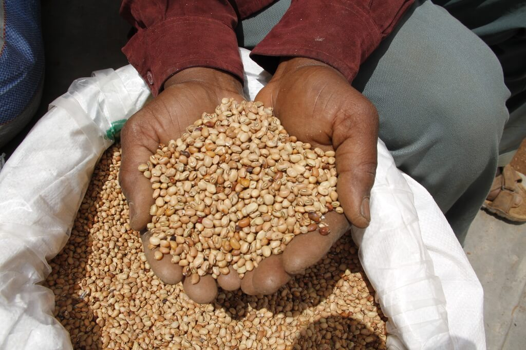 Picture of Members of the Umoja wa watuamiaji maji group show the remaining cowpea seed after harvest and selling.
