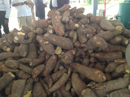 Picture of Cassava is a staple root crop in many African countries.