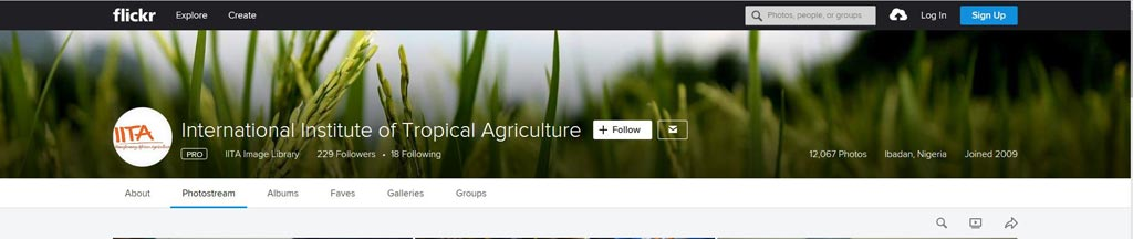 Picture of IITA Flickr masthead