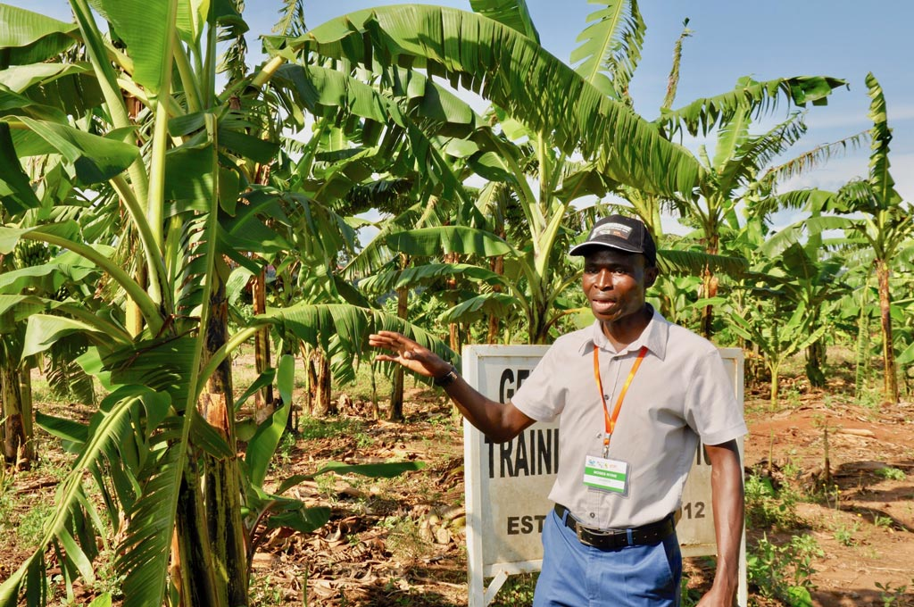 Picture of Moses Nyine explaining his research in a banana field in Uganda.