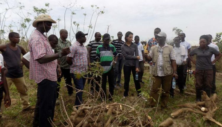 Picture on AfDB team at IITA demonstration farm in Kakata Margibi County responding to issues raised by the cassava farmers.