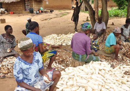 Picture of more women in the cassava value chain are in the production and processing nodes.