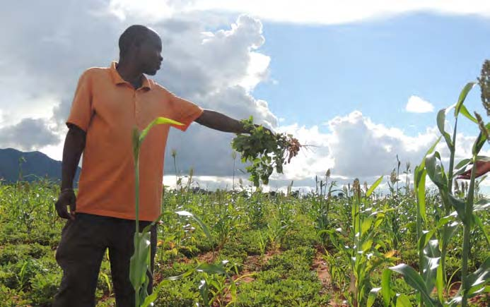 Picture of Silvanus Andrew, a groundnut and sorghum farmer from Iduo village, shows off his intercrop.