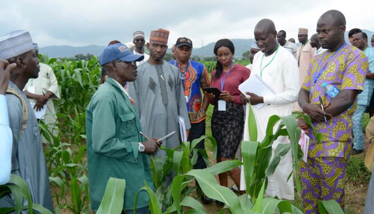 Picture of Daniel Adekunle (in green cap) of Maize Breeding explaining about IITA's work on maize to participants
