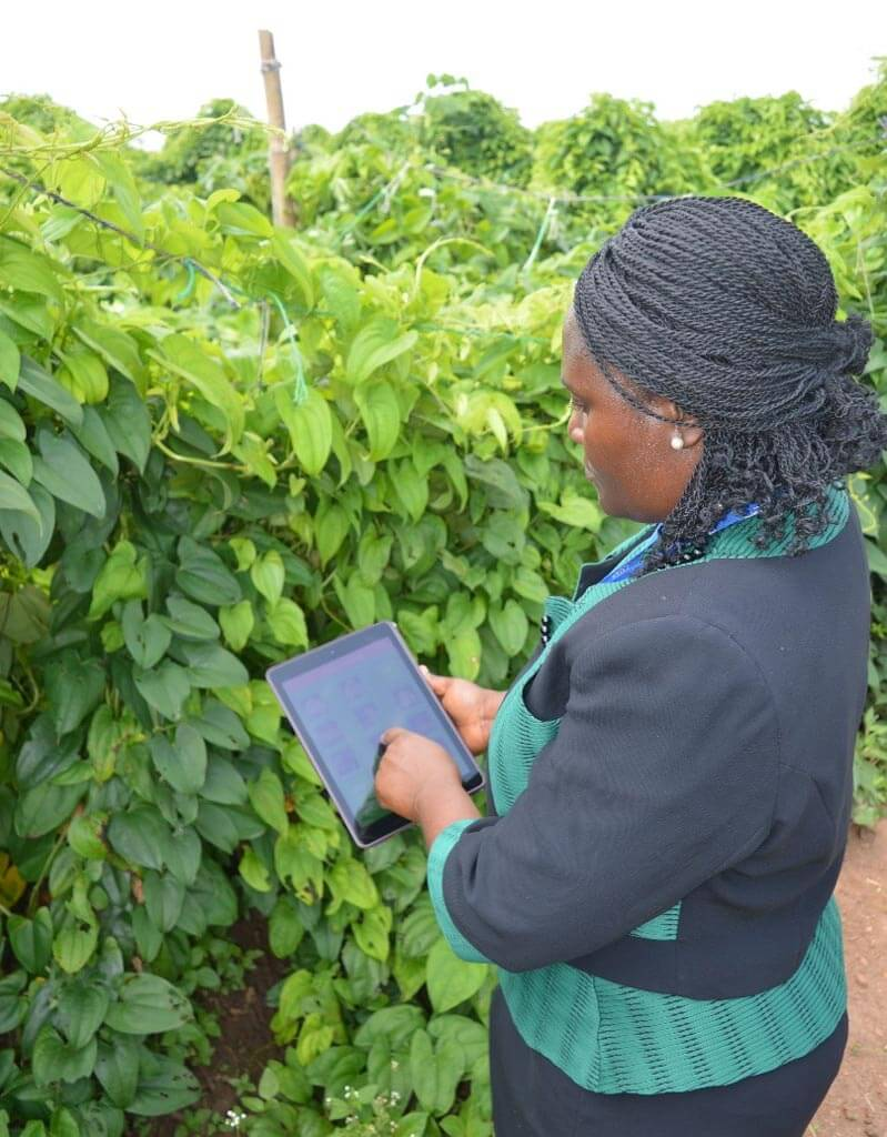 Picture of Dr Kolade in the field with the 'Leaf Doctor' App