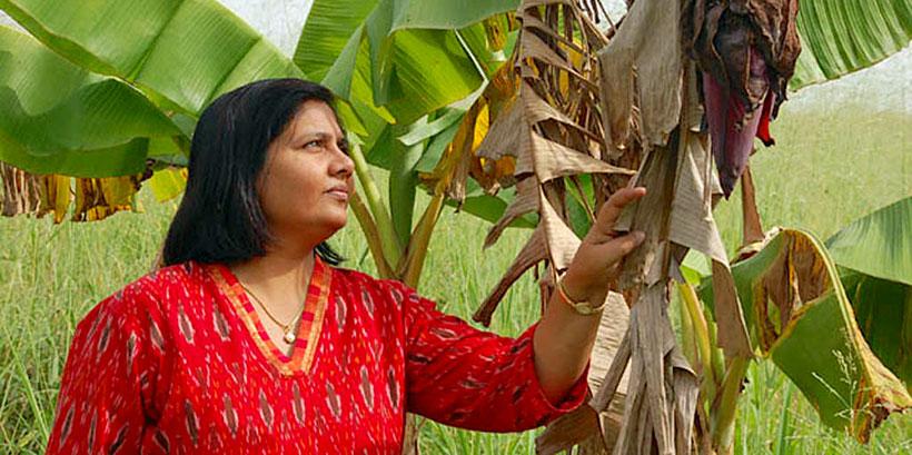 Dr Leena Tripathi, IITA Principal Scientist observing her crop yield.