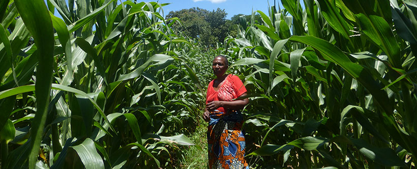 SUN project participant in her maize field.