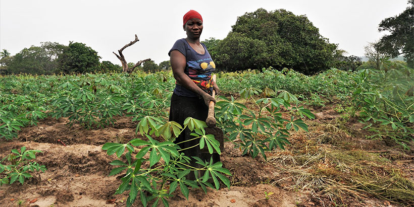 AKILIMO tools provide recommendations that help farmers maximize their return on their cassava investments.