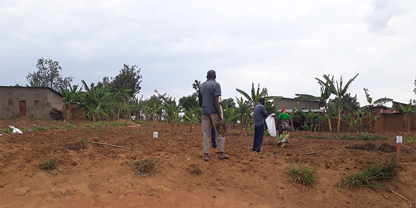 Rwanda uses tricot approach to identify the best potato and cassava varieties in various agroecological zones