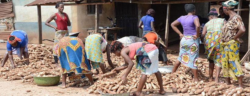 Women traders in a cassava market in Southwest Nigeria.