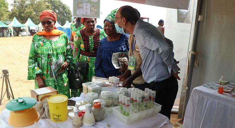 Agropastoral and social fair showcases IITA's technologies and achievements in Cameroon