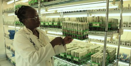 CGIAR Germplasm Health Units contributing to global phytosanitary systems