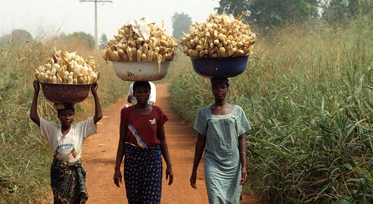 Researchers call for gender-friendly crop varieties to aid food security