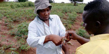 NEXTGEN Cassava breeder receives Cornell Africa Fund Fellowship