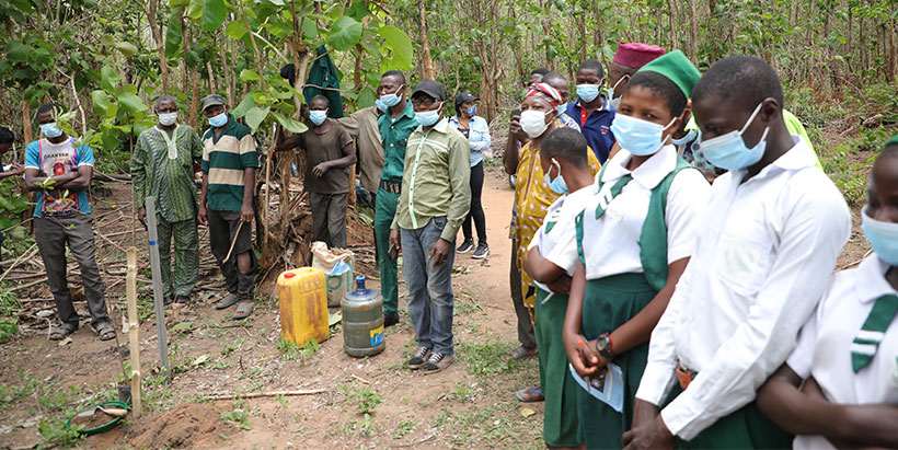 IITA partners with Nigerian Breweries for Olokemeji Reforestation