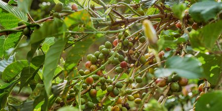 Circular economy: The driving force for sustainable coffee production in DRC