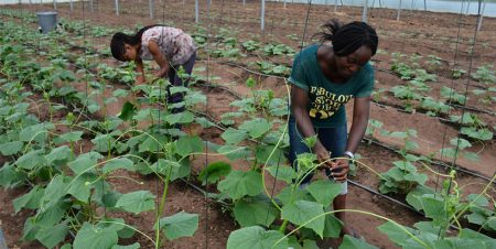 Study shows way to influence youth performance in Agripreneurship