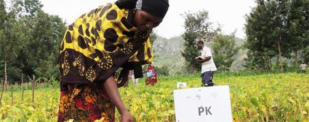 Research finds no basis for farmers' negative perception of the quality of fertilizers in Tanzania
